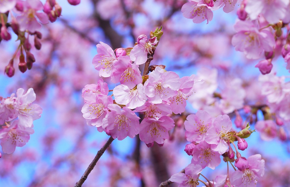 銀魂紅桜篇