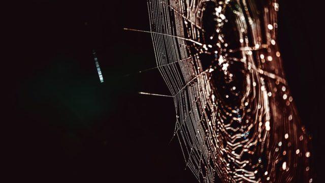 銀魂紅蜘蛛篇